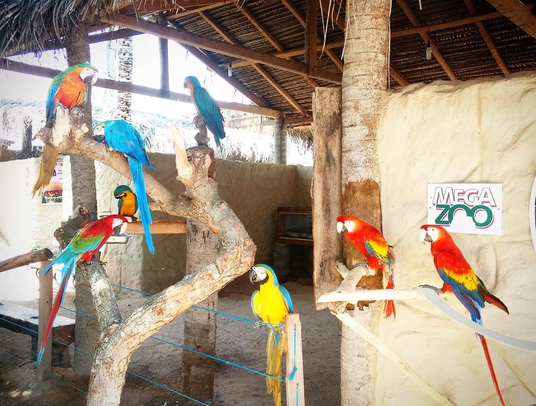 Zoológico interativo em Maragogi - aves brasileiras